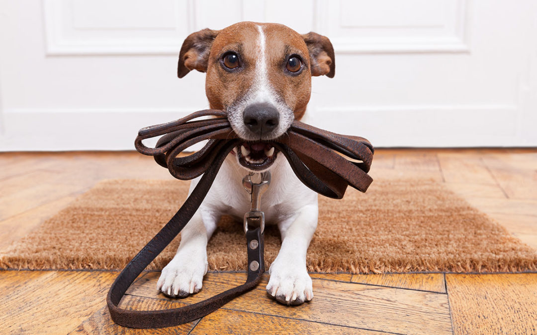 Leashes Need Licenses? Dog Sitting Requirements
